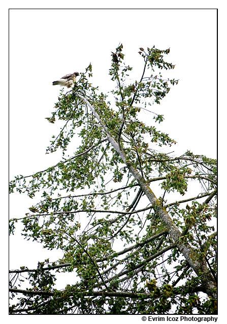 wedding wildlife hawk